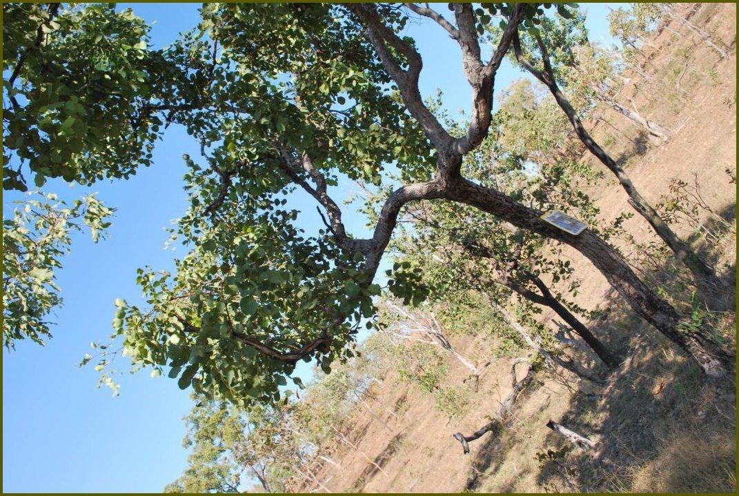 target_tree2